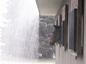 ICF - Romy Watching the Rain Fall