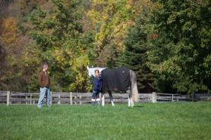 horse-grazing2